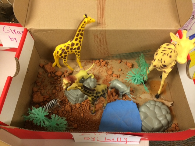 Diorama Habitat Completes Weeks Of Research For First Grade Classes